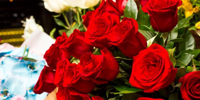 Anniversario Matrimonio Quante Rose.Rose Rosse Colorate Quante Se Ne Regalano Il Significato Del Colore